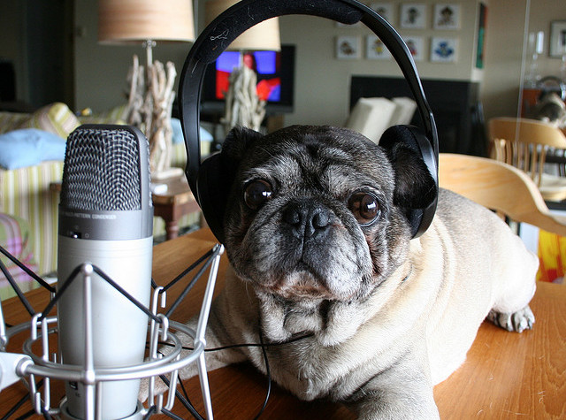 2008 Roscoe considers recording a podcast by zoomar via Flickr